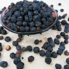 SLOE | Prunus spinosa | Fruit