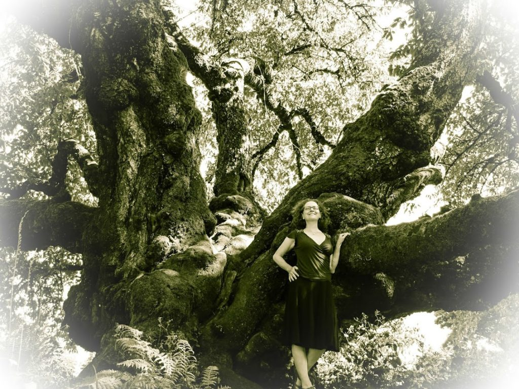 Black Tartarian Oregon State Heritage Cherry Tree planted 1847
